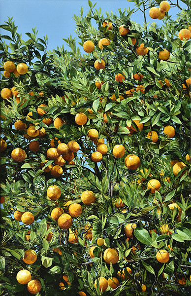 Alan Thompson, Orange tree