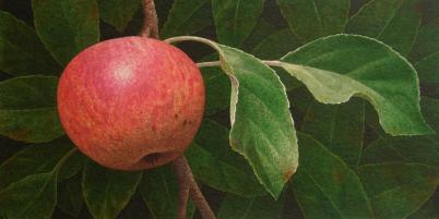 Nigel Ashcroft, Apple (unframed)