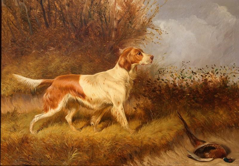 Colin Graeme (Roe), Red & White Setter