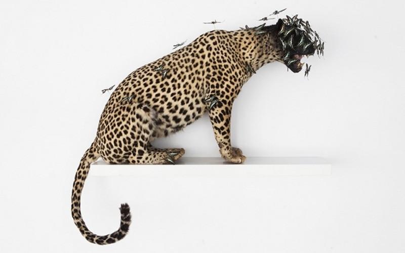Peter Gronquist, Leopard, 2015