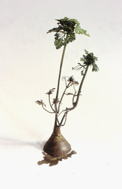 Uprooted (Detail), 2001