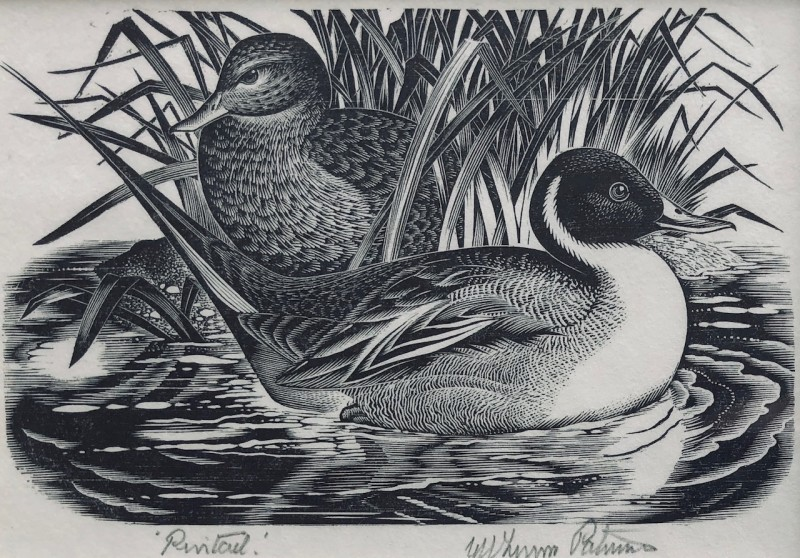 George W. Lennox Paterson (1915-1986)Pintails