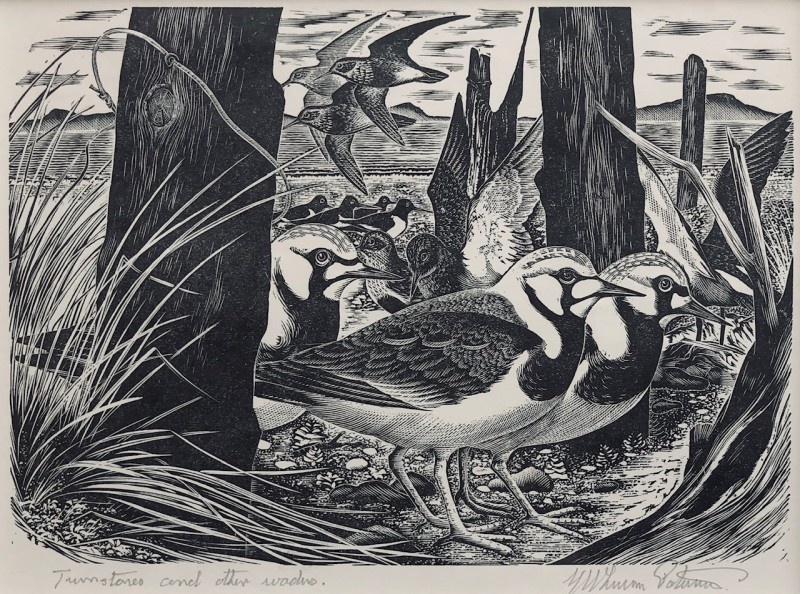 George W. Lennox Paterson (1915-1986)Turnstones and other Waders