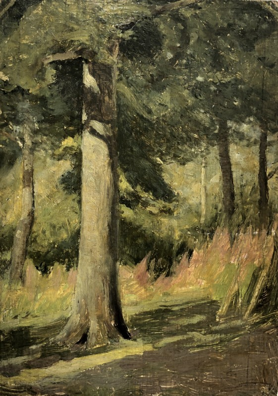 William Cubitt Cooke (1866-1951)Willow-herb, Sunshine in an Oak Wood, Hampshire, c. 1910