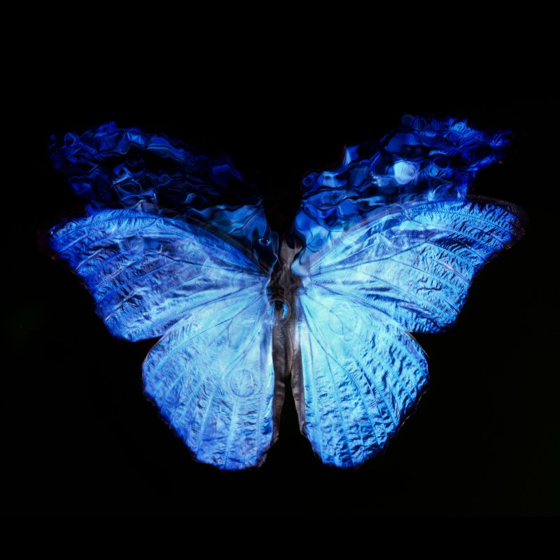 Alexander James Hamilton, Transparency of a Dream [0813-023], 2013-2018. Unique chromogenic photograph, mounted to non-reflective museum diasec. 120 x 120 (framed: 146 x 146) cm