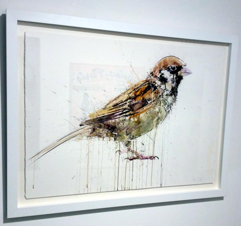 Dave White, Sparrow
