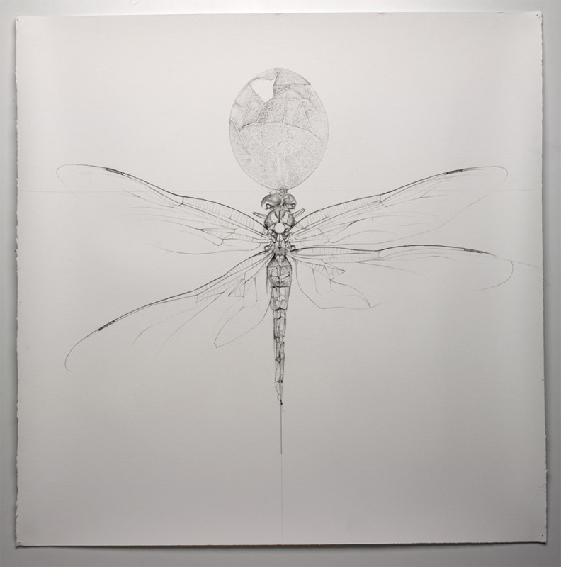 Jessica Albarn, Dragonfly and the Egg