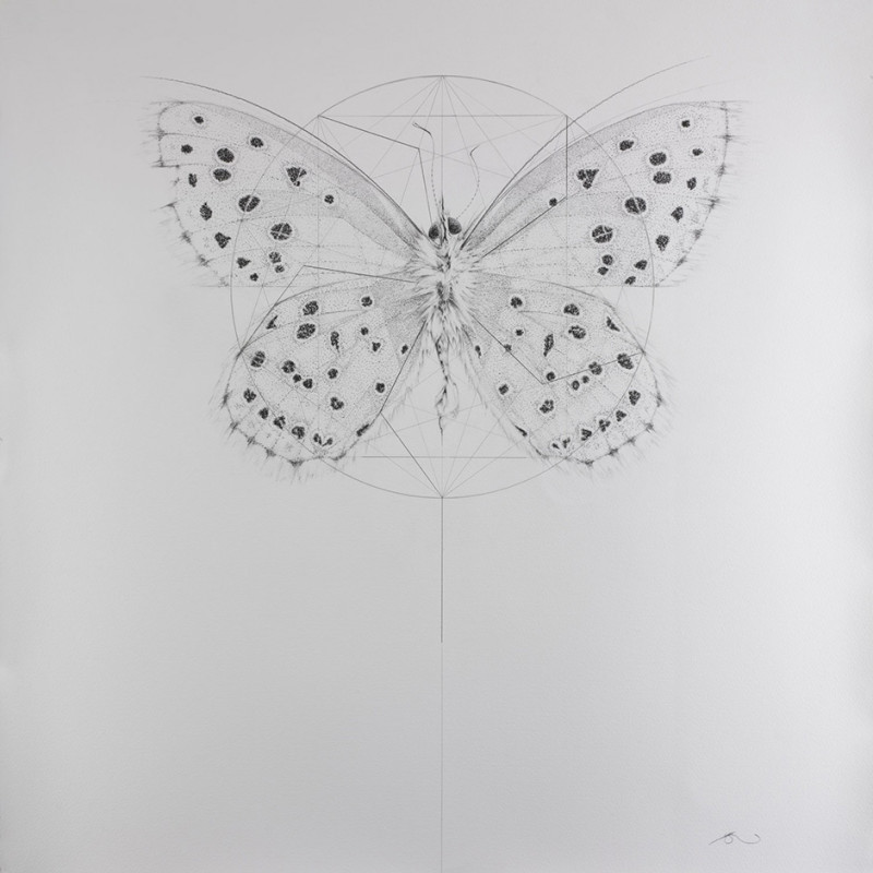 Jessica Albarn, Mezarine Blue (Extinct British Butterflies)