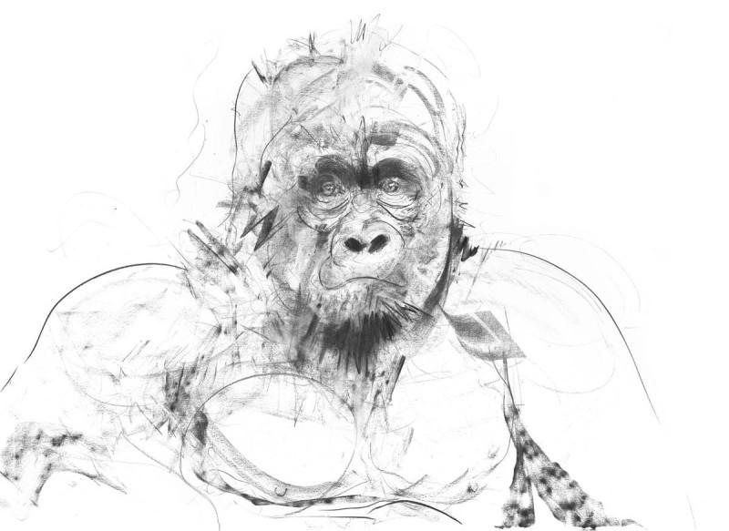 Dave White, Gorilla, 2017