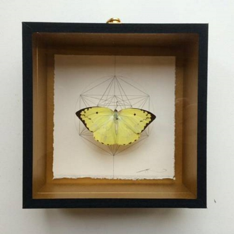 Jessica Albarn, Geometry of the Butterfly – Sand Brown