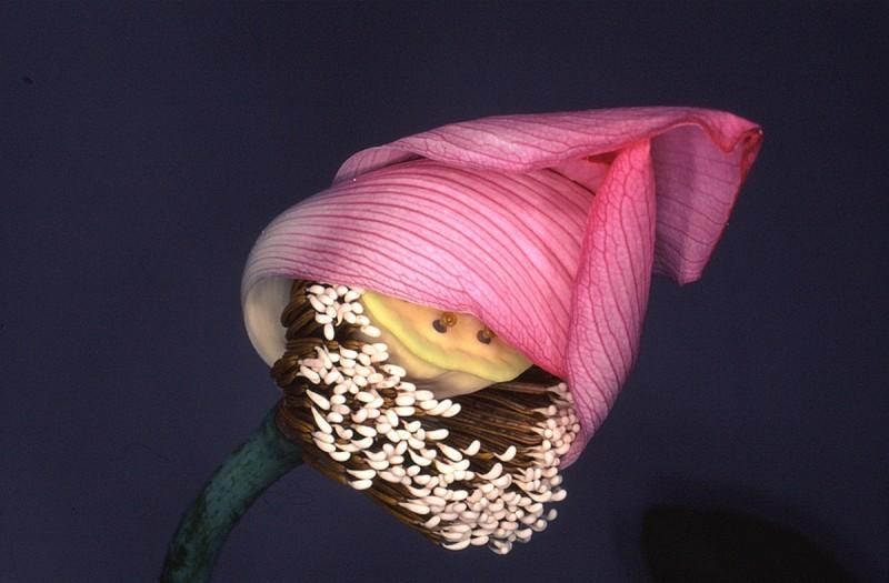 Flower Rondeau, 1997-2019