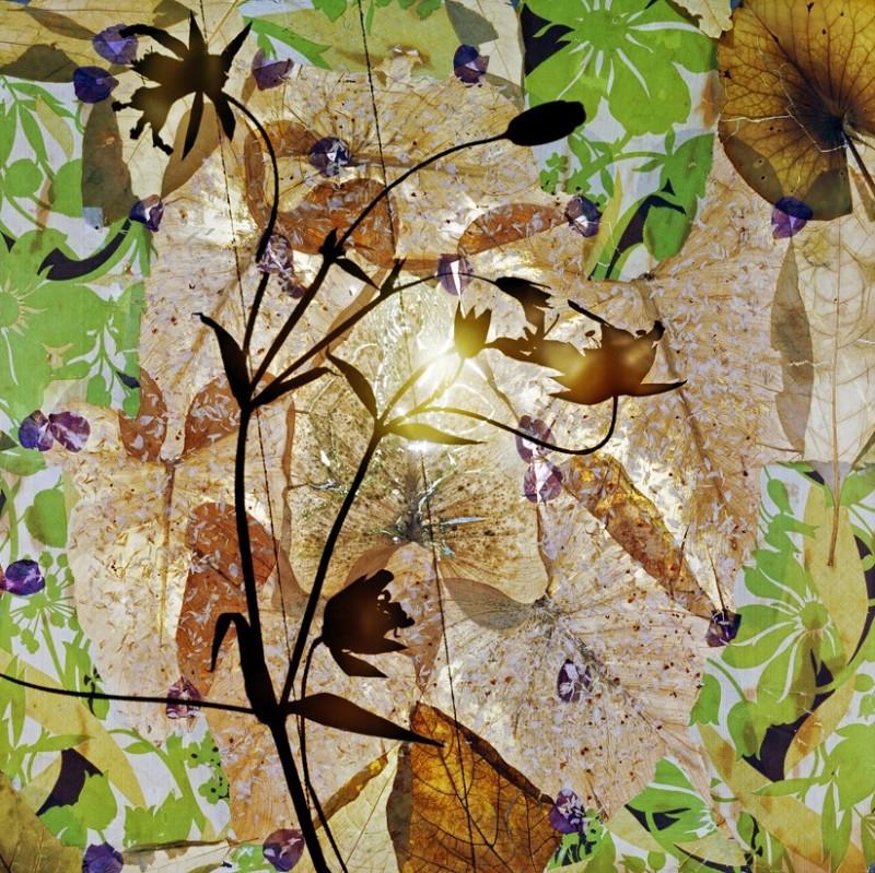 Thomas Zika, Somnambule flowers, 2014/15
