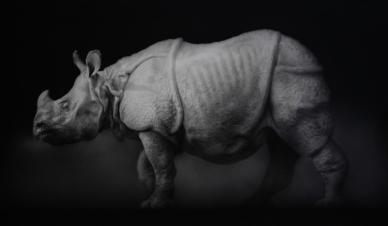 <span class=%22title%22>Indian Rhinoceros<span class=%22title_comma%22>, </span></span><span class=%22year%22>2011</span>