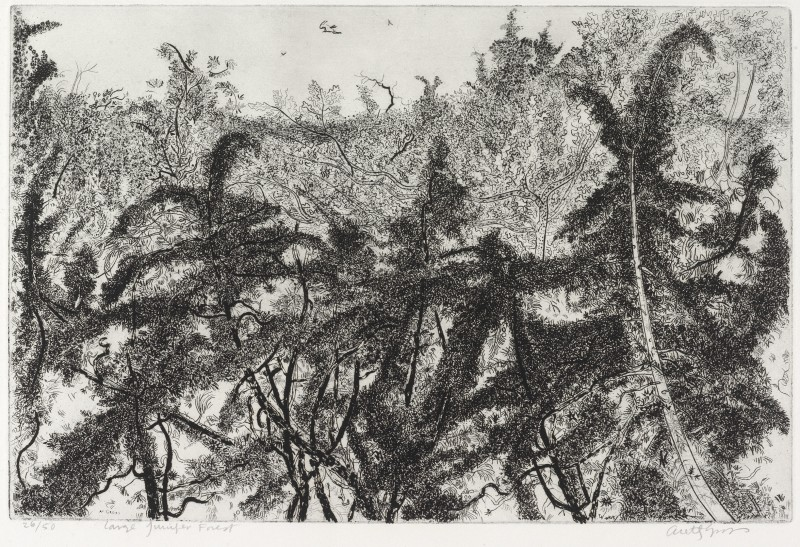 <span class=%22title%22>Large Juniper Forest<span class=%22title_comma%22>, </span></span><span class=%22year%22>1952</span>
