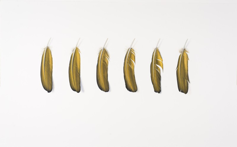 <span class=%22title%22>Six Yellow Feathers<span class=%22title_comma%22>, </span></span><span class=%22year%22>2016</span>