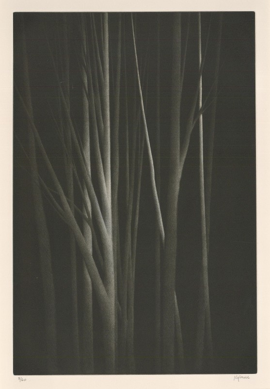 <span class=%22title%22>Forest Nocturne III<span class=%22title_comma%22>, </span></span><span class=%22year%22>2000</span>