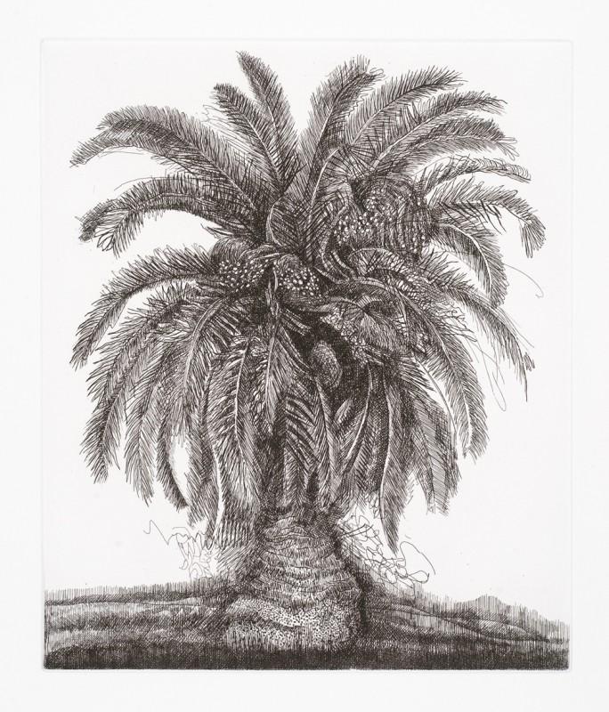 Paul Hawdon RE, Palm Tree