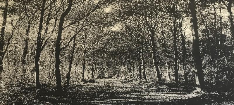 Trevor Price RE, Woodland Walk