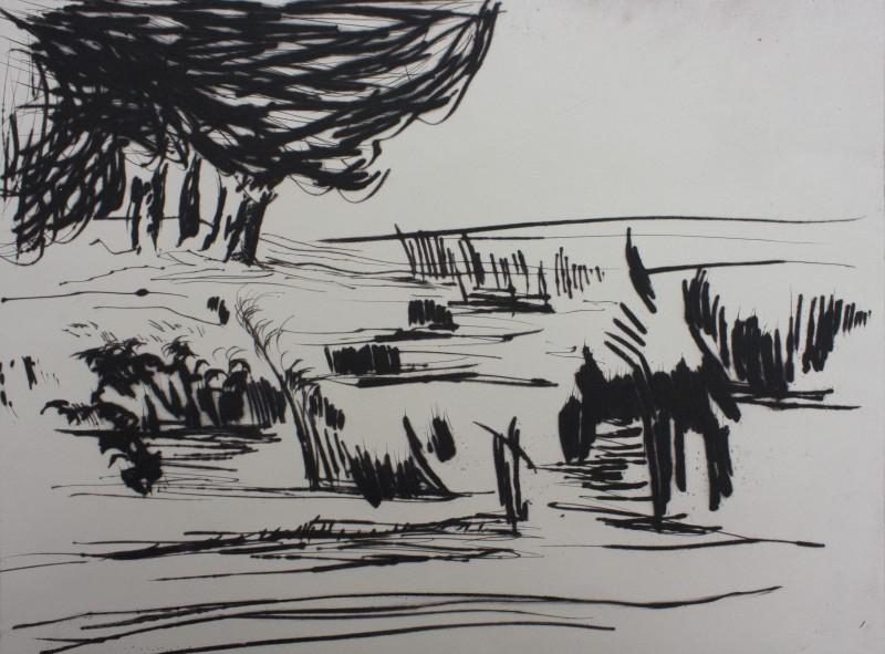 Marsh Waterbanks of the River Lee