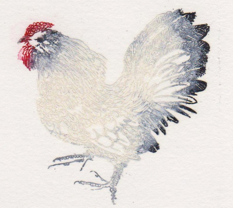 Rosamund Jones RE, My White Cockerel