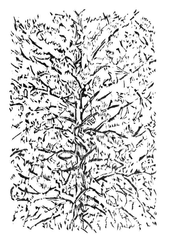 Sasa Marinkov RE, Window Tree