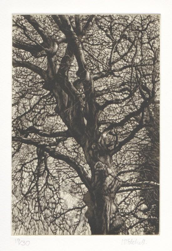 Martin Mitchell ARE, Winter Beech