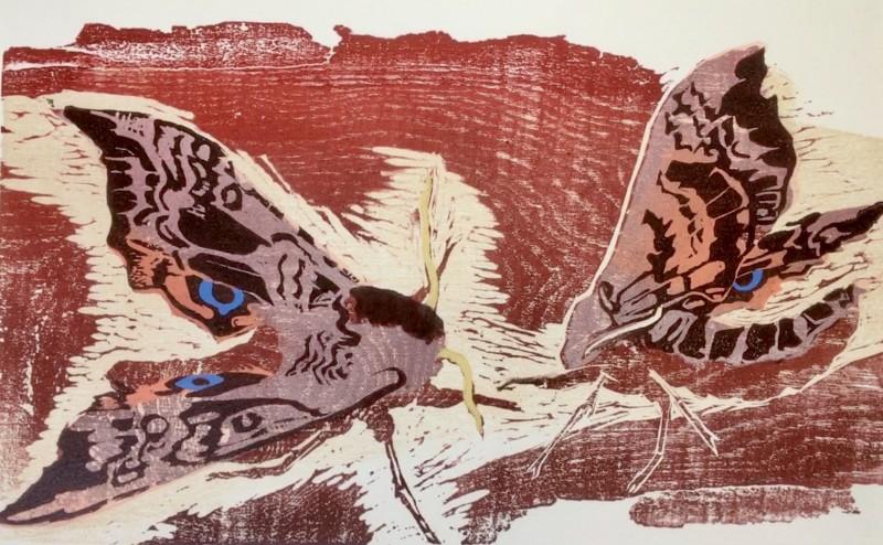 Julia Manning RE, My Garden Moths, Hawk eye Moth