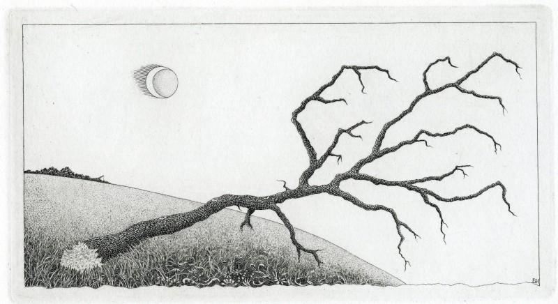 Brian Hanscomb RE, Stricken Tree - Bodmin Moor