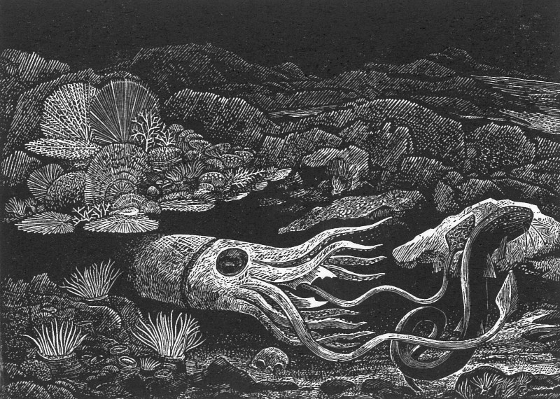 Ian Stephens RE, The Kraken