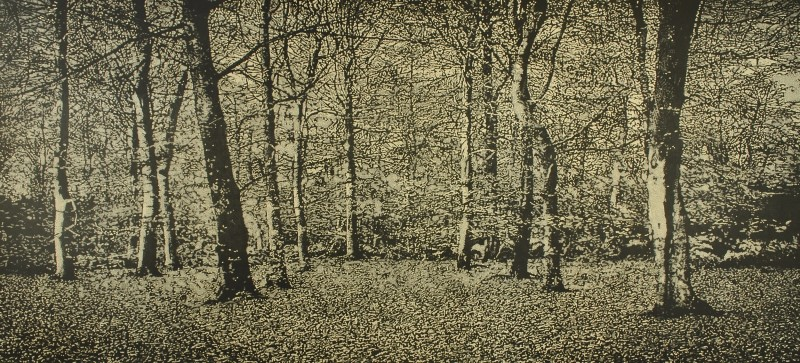 Trevor Price RE, The Beech Wood