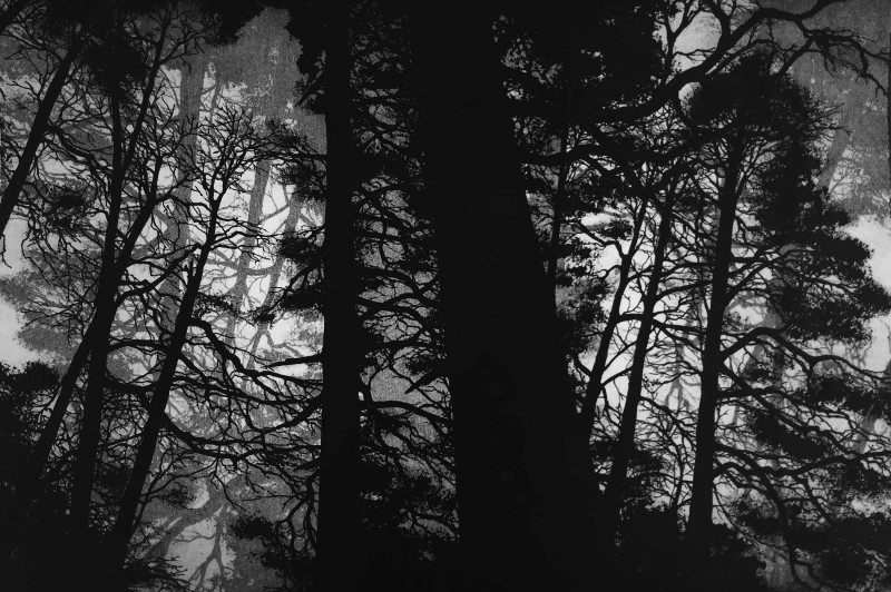 Blaze Cyan ARE, Wellington Woods