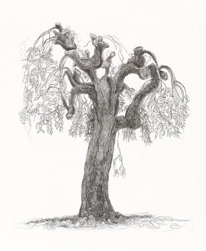 Paul Hawdon RE, Tree