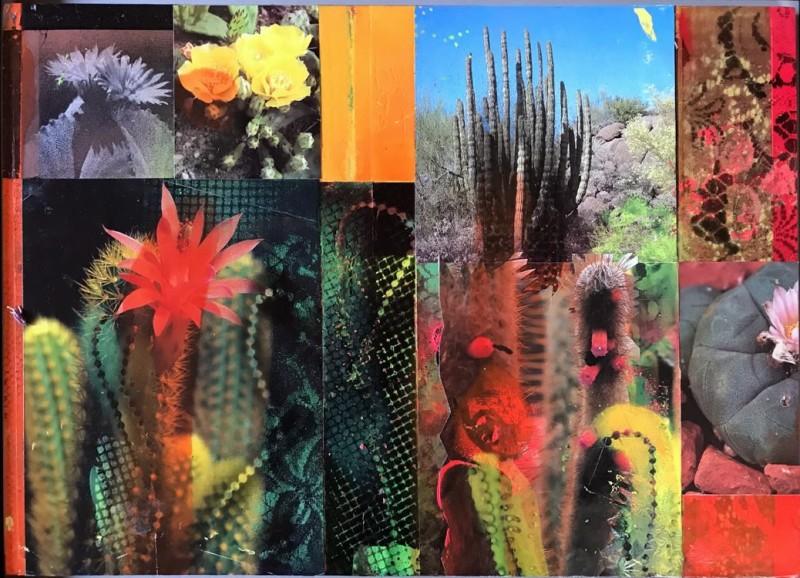 David Ferry PRE, Cacti Garden 17