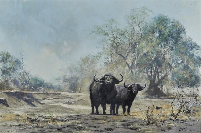 David Shepherd , Buffalo, Luangwa Valley, Zambia