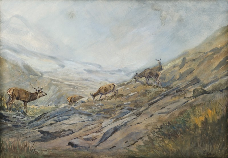 The grazing herd