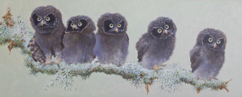 Baby Tengmalm's Owl I