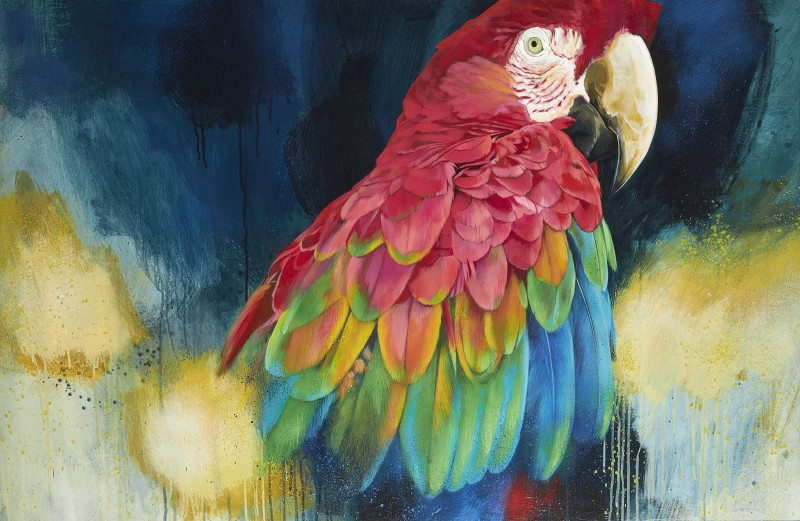 Scarlet Macaw study 2020