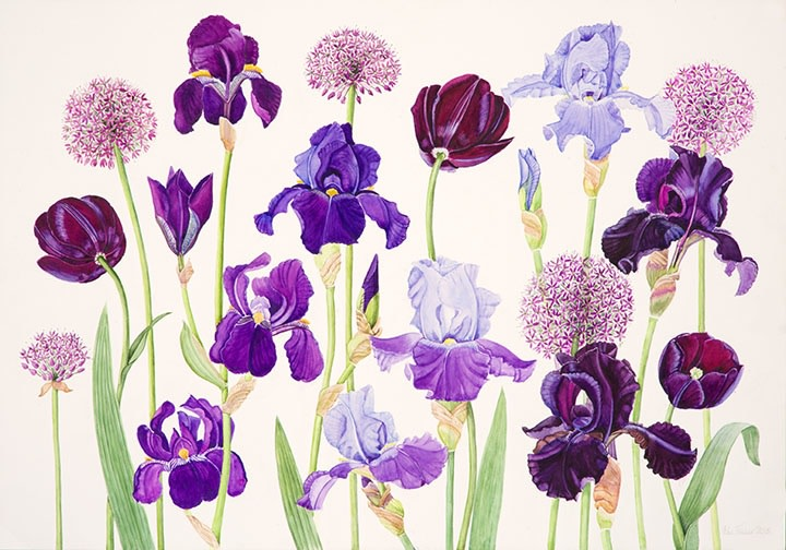 Ann Fraser , Blue and Purple Irises with Alliums