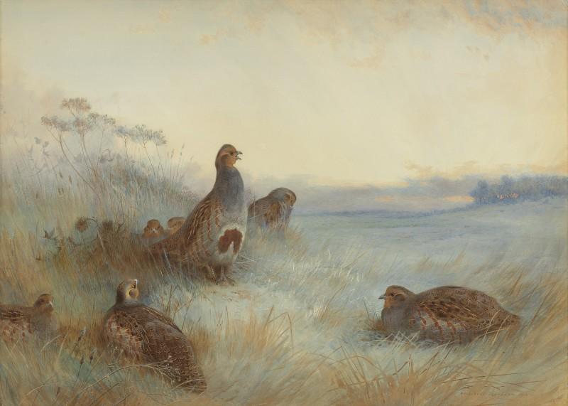 Archibald Thorburn , Partridges