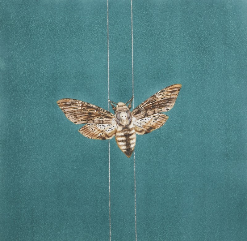 Moth on golden thread