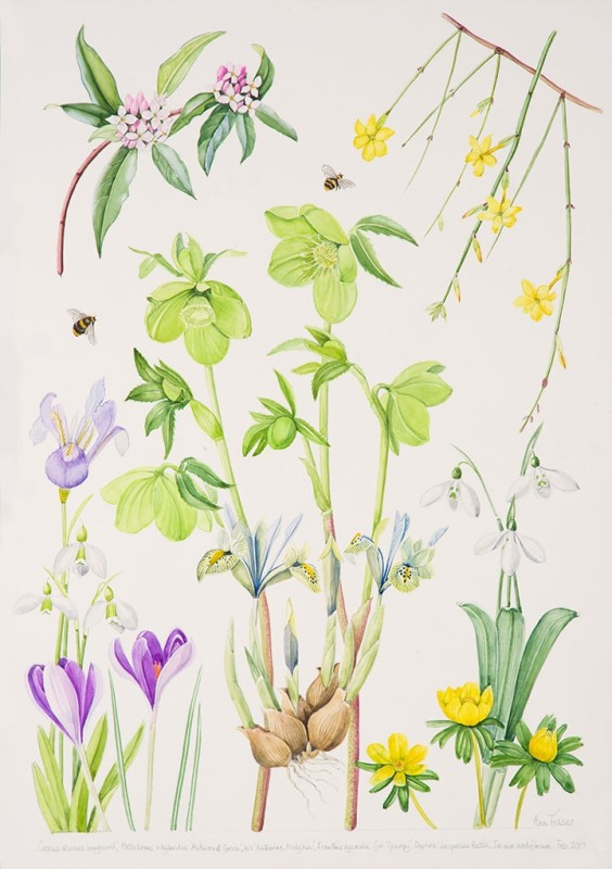 Ann Fraser , Early spring with green Hellebore and Daphne