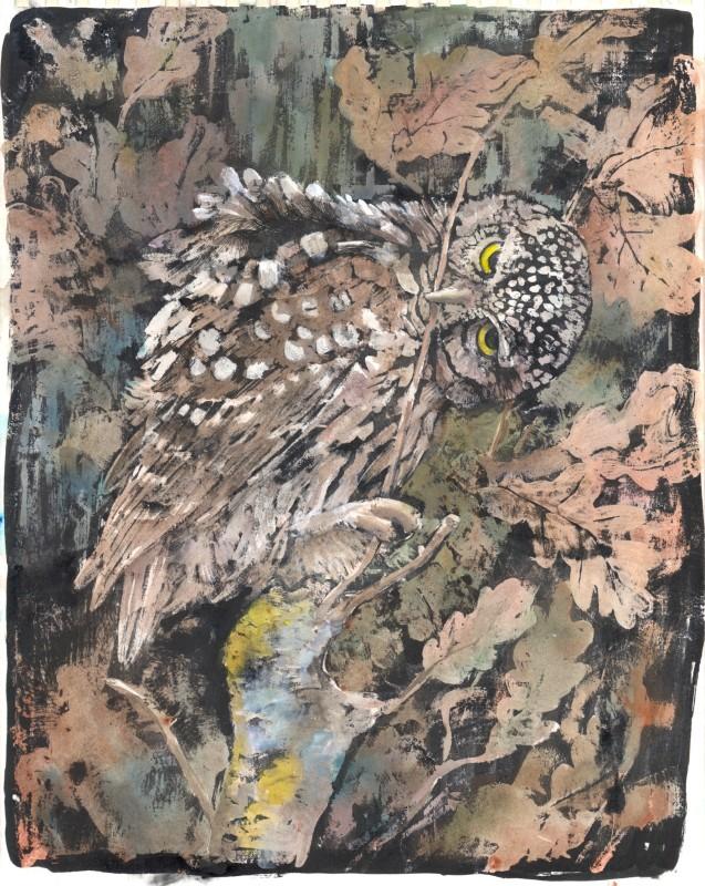 Emma Faull , Little Owl