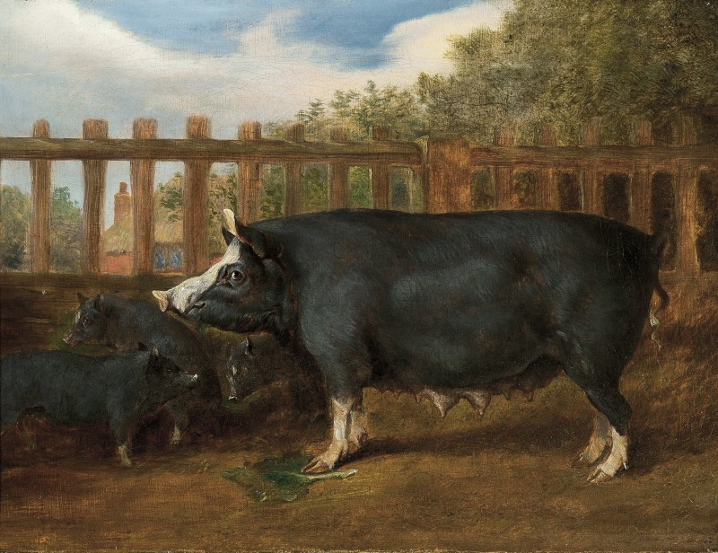 English School (19th Century) , A Berkshire sow and piglets