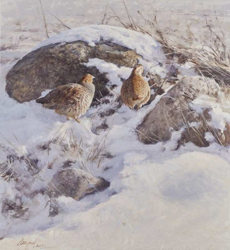 Partridge in winter