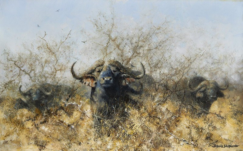 Buffalo in the African bush