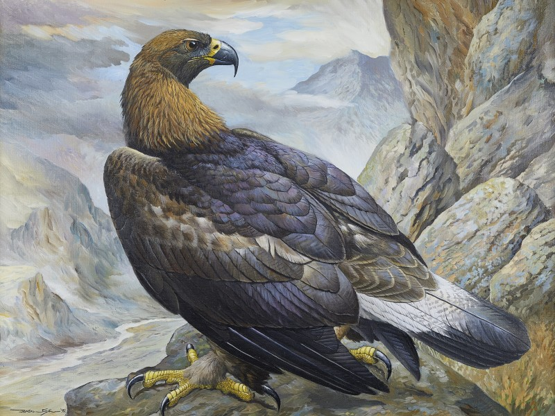 Basil Ede , Golden Eagle