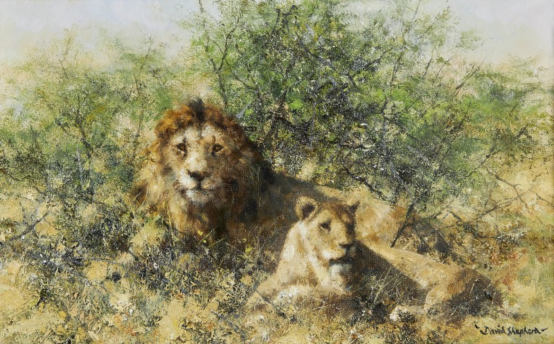 David Shepherd , A Lion and Lioness