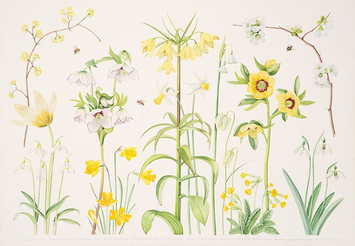 Ann Fraser , Early Spring with Fritillary and Bees