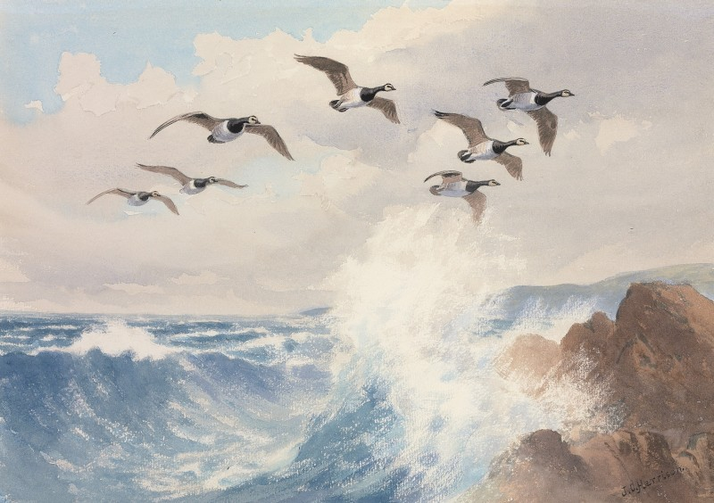 John Cyril Harrison , Barnacle Geese over the coast