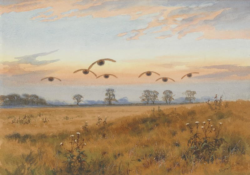John Cyril Harrison , An autumn sunset, Partridges